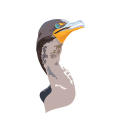 Florida Everglades National Park Cormorant Detailed Vector Design - Logo, Bumper Sticker Idea