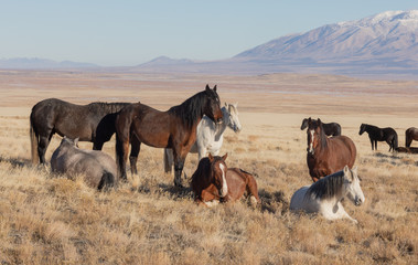 Wild Horses in the Utah Desert in Winter