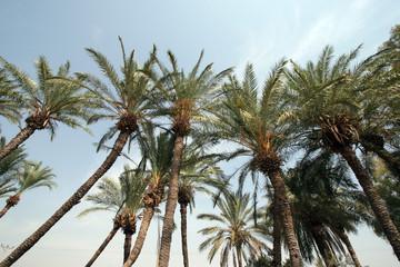 Palm trees in desert