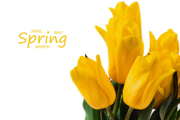 Spring concept. Bouquet of yellow tulips isolated on white