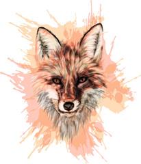 Red Fox - Stylized vector art - Grunge art