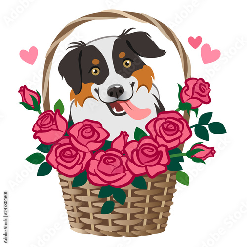 Free dating sites for pet lovers