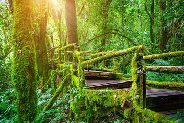 Obraz Ang ka nature trail in Doi Inthanon national park , Chiang mai , Thailand. - fototapety do salonu