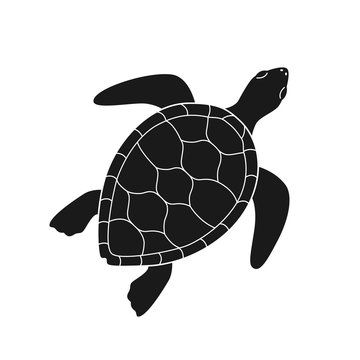 Isolated black silhouette of marine green turtle with white lines on white background. Top view. View from above.