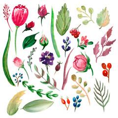set of watercolor elements