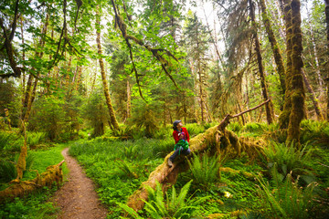 A woman pauses for a rest and a drink of water along the Bogachiel Rain Forest Trail #825 in the Olympic National Park.