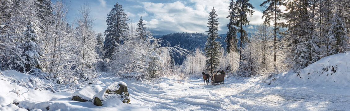 Winter landscape, panorama, banner - view of the snowy road with sleighs, harnessed by horses, in the winter mountain forest