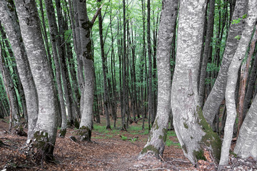 Forest in the Albanian Alps