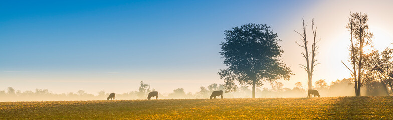 Aluminium Prints Autumn Cows Feeding at Sunrise