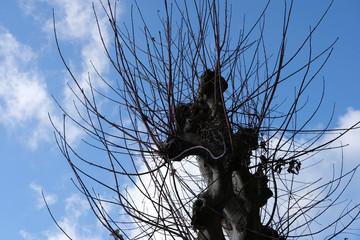 tronc d'arbre en hiver