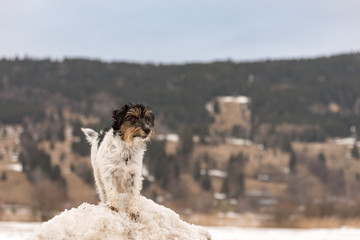 Jack Russell Terrier dog 3 years old is standing on a snowy hill in front of moutains in Oberammergau Germany
