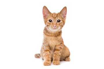 red striped kitten