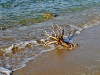 Baumstumpf im Wasser am Strand