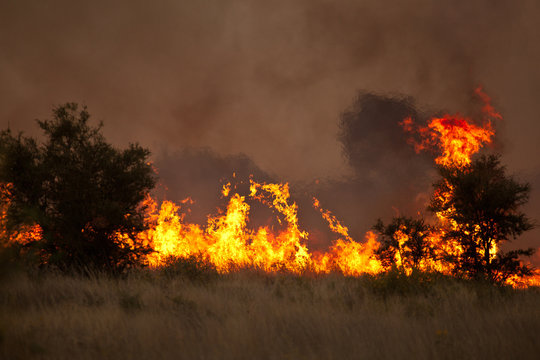 bushfire in grassland with trees