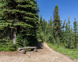 Hiking trail in mountains meadow in summer season Sunny weather blue sky and green forest.