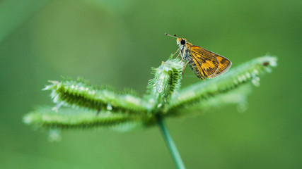 nature macro photography. namely the art of taking pictures according to existing circumstances