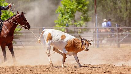 Calf Roping Rodeo Event In Australia