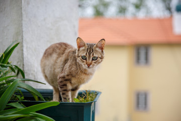 Sad kitten sitting in a flower pot on the street. Copy space.
