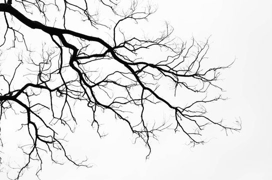 Bare tree branches on a pale white background
