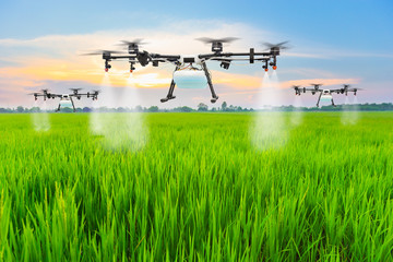 Agriculture drone fly to sprayed fertilizer on the rice fields Wall mural