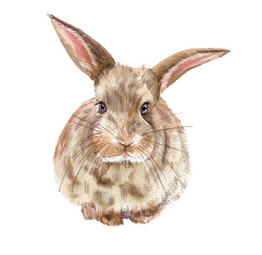 Illustration with rabbit. Watercolor high quality illustration. Easter card.