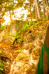 old leaved bunker of the Russian army in a forest in Poland