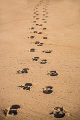 track on a beach, dog