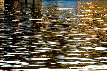 Water of the sea with sun reflections