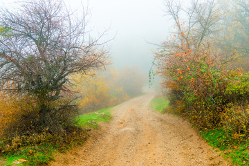 Silhouettes of bushes, autumn day in the mountains, landscape in dense fog