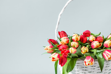 Basket with flowers, bouquet of tulips on gray background. Women day card.