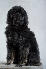 Black Dog, Portrait