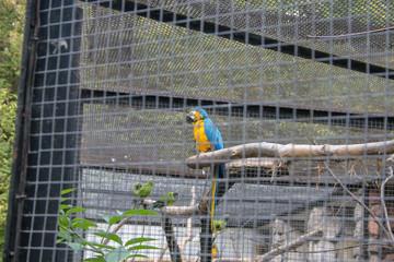 papuga w klatce w zoo