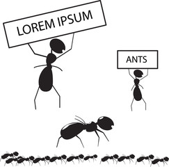 Set of ants with frames for text