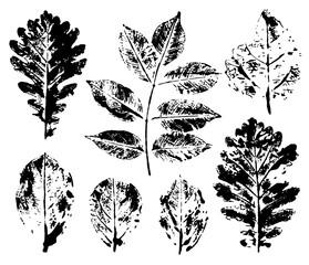 Leaves imprints set isolated on white background. Vector illustration