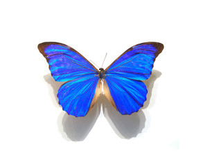 beautiful butterflies in the white background