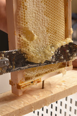 honey harvest in close-up