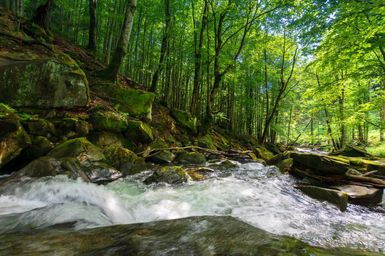 forest stream among the rocks. beautiful summer scenery with refreshing rapid flow. logs and branches of trees in the water. wonderful nature background. environment concept