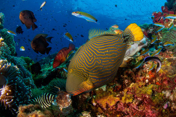 Underwater fish on coral reef