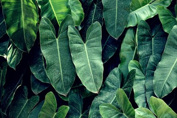Tropical green leaf texture background, natural jungle backdrop concept, copy space