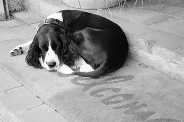 Sad dog waiting for his owners on  Welcome home carpet  at the entrance to the house. Black white photo.