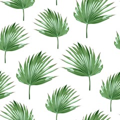 Tropical palms, white background. Seamless pattern. Jungle foliage illustration. Exotic palm leaves. Summer beach floral design. Paradise nature.