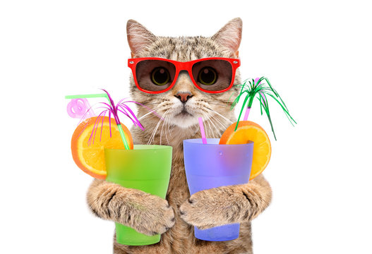 Funny cat in sunglasses with cocktails in his paws isolated on white background