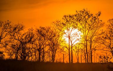 Meadow with sun 6