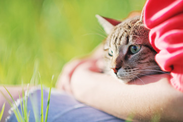 Pets Care. Young woman holding beautiful cat outdoor. Cute cat watching and looking on woman's arm in the street. Friendship Love concept. Cat green eyes close up.