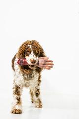 Symbolbild bissiger Hund