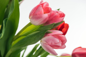 bouquet with pink and red tulips isolated on white