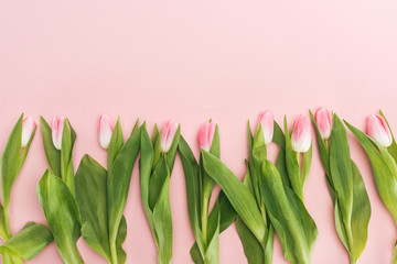 top view of spring tulips in row isolated on pink