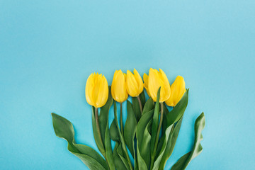 top view of bouquet with yellow spring tulips isolated on blue for international womens day