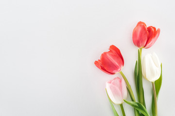 top view of red, pink and white tulip flowers isolated on grey