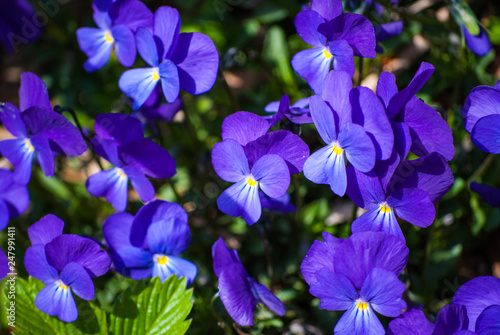 Fiori Viola Stock Photo And Royalty Free Images On Fotolia